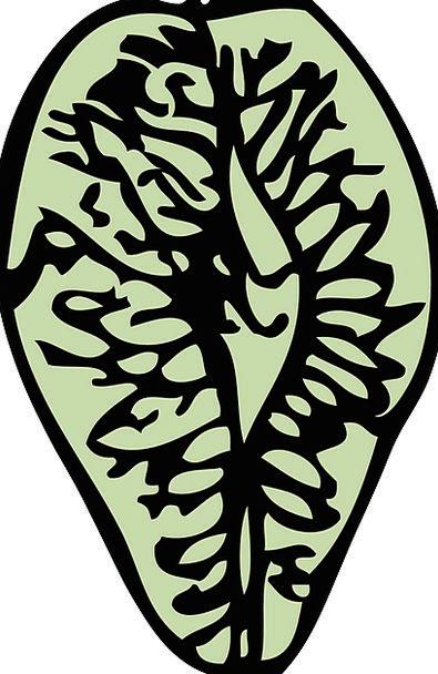 Elm Kernel Tree Sapling Seed Reproduction Imitatio