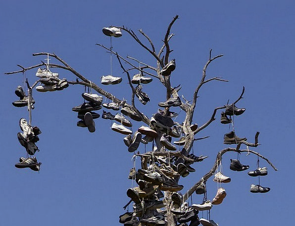 Shoes Sapling Balboa Park Tree Strange Odd Custom