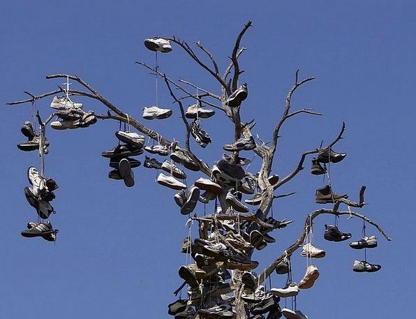 Shoes Sapling Balboa Park Tree Strange Odd Custom
