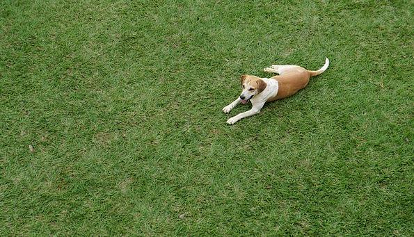 Dog Livestock Pet Domesticated Domestic Animals Ca