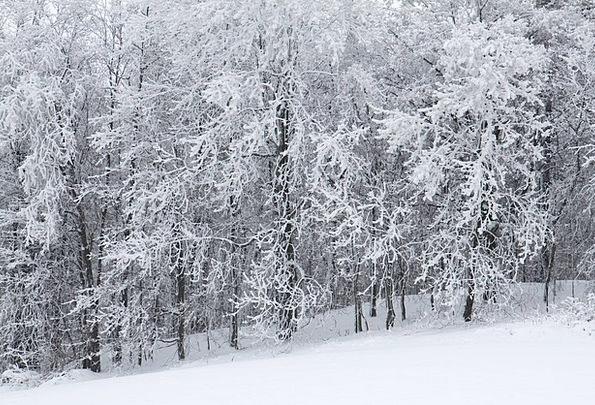 Cold Emotionless Landscapes Enclosed Nature Forest