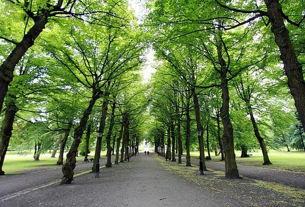 Forest Woodland Landscapes Plants Nature Green Lim