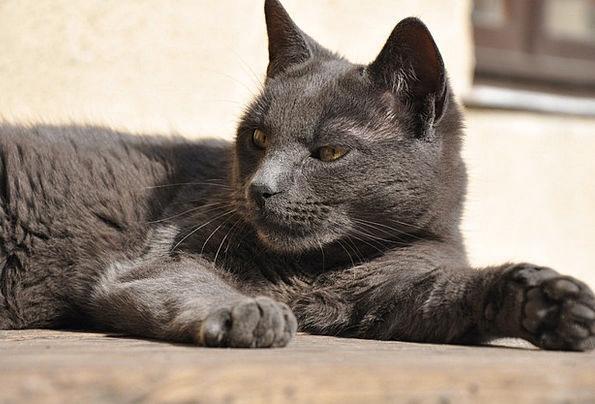 Cat Feline Care Wild Rough Attention