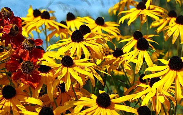 Flowers Plants Flower Floret Sun Hat Ornamental Pl