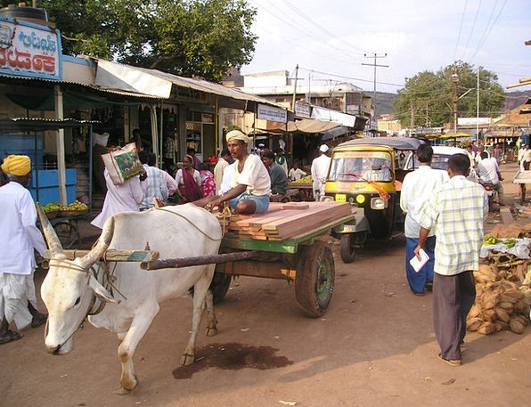 India Oxen Steers Oxcart Dealer Trader