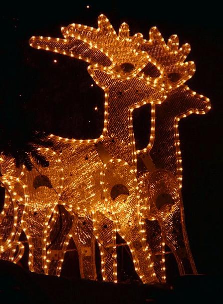 Lichterkette Reindeer Christmas Winter Season Ligh