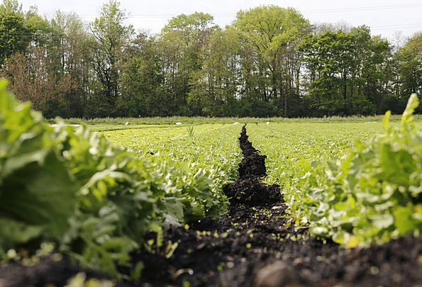 Salad Arena Vegetables Potatoes Field Agriculture