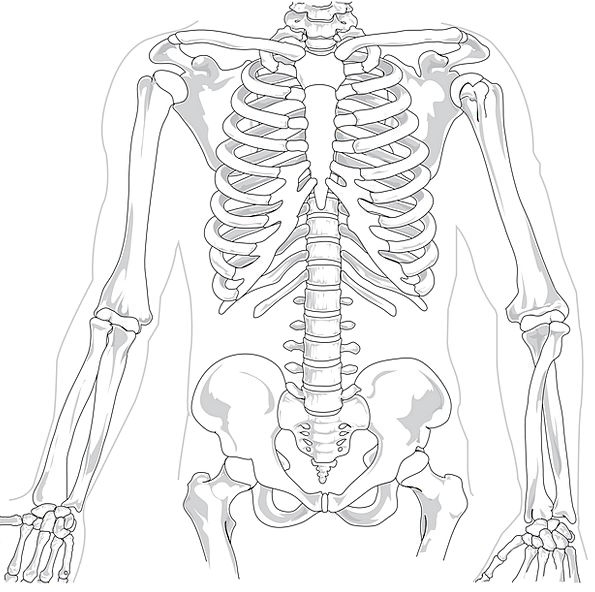 Skeleton Minimum Medical Humanoid Health Diagram D