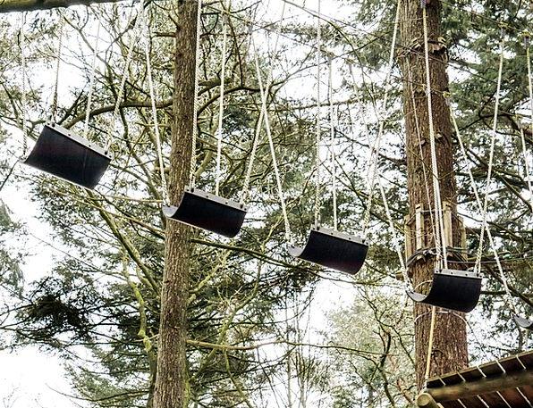 Climbing Forest Tall Trees Plants High Upward Risi