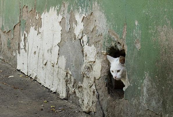 Cat Feline Partition Hole Fleabag Wall Surprise As