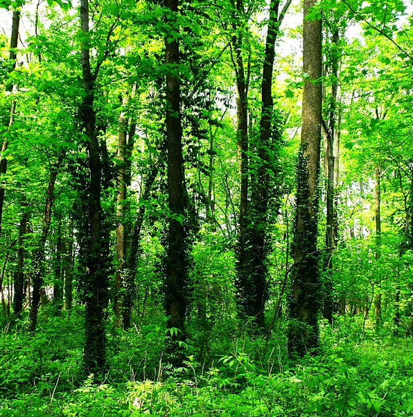 Trees Plants Landscapes High Nature Woods Forests