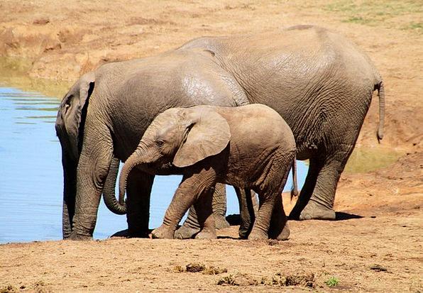 Elephant Monster Landscapes Nature Africa African