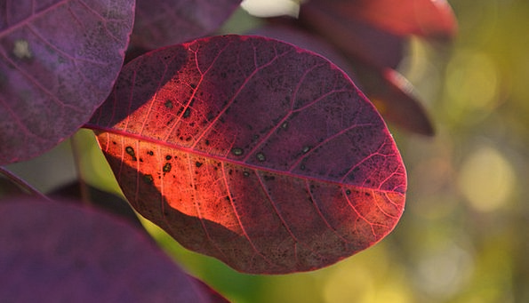 Leaves Greeneries Landscapes Mauve Nature Autumn F
