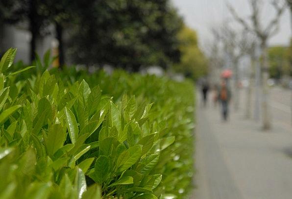 Leaf Foliage Common The Scenery Park China Porcela