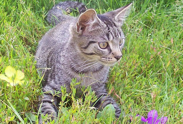 Cat Feline Plot Flower Floret Garden Curiosity Inq