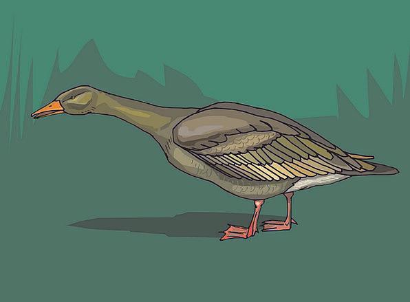 Bird Fowl Stoop Grass Lawn Duck Wings Annexes Curi