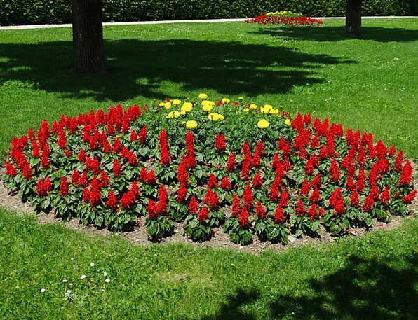 Flower Bed Plants Red Bloodshot Flowers Park Commo