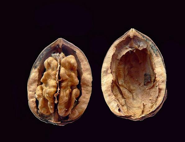 Walnut Drink Fractured Food Kernel Seed Cracked Ed