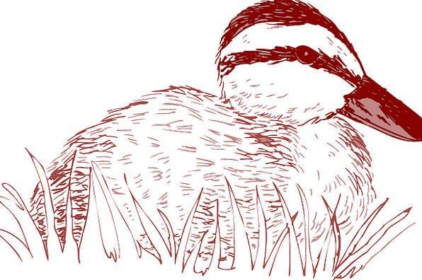 Bird Fowl Stoop Grass Lawn Duck Style Chic Sitting