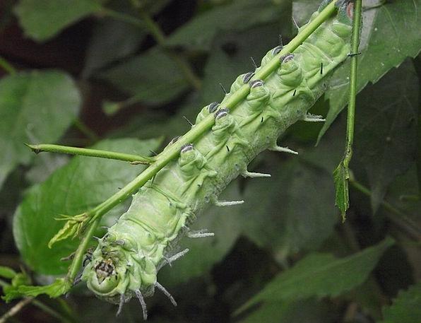 Grab Clutch Landscapes Grip Nature Plant Vegetable