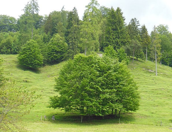 Trees Plants Spring Coil Mountain Meadow Berchtesg