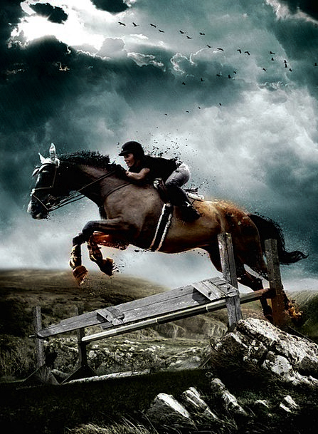 Horse Mount Hurdle Equestrian Riding Jump Stallion