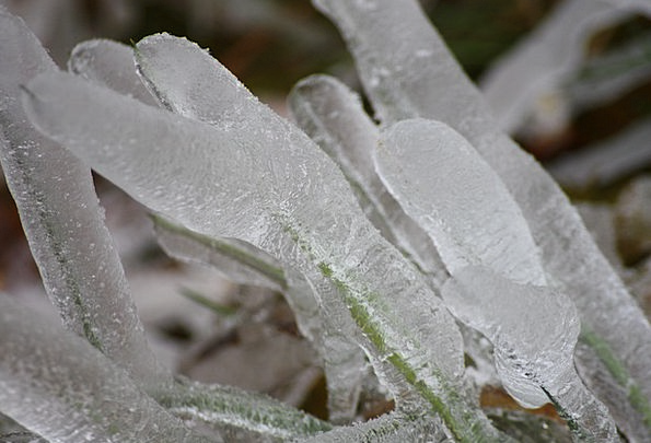 Ice Frost Weed Grass Lawn Wild Plant Winter Season