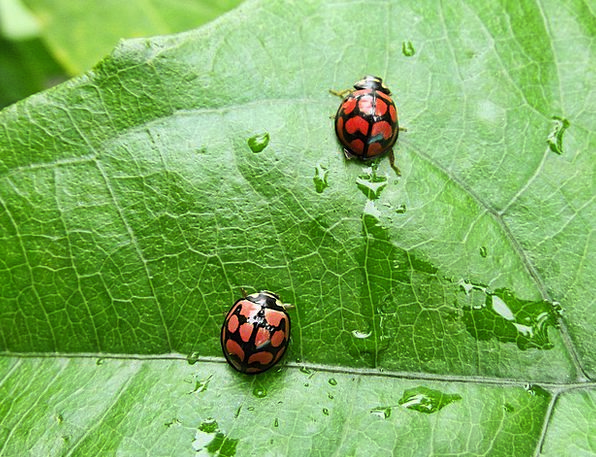 Insects Bugs Landscapes Nature Ladybird Ladybirds