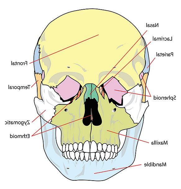 Skull mind medical drawing health labelled branded diagram skull mind medical drawing health labelled branded ccuart Image collections