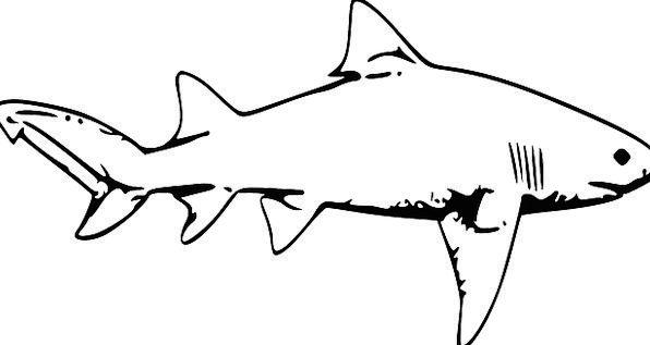 Stark Unambiguous Physical Fish Angle Animal Huge