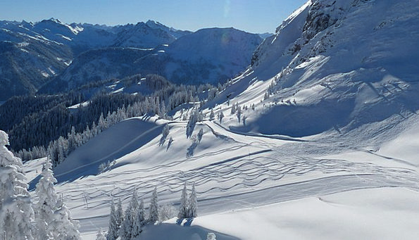 Skiing Ski Run Ski Slope Fir Forest Runway Airstri
