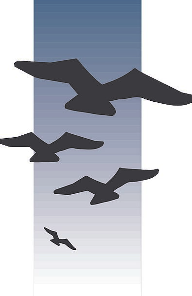 Birds Natures Hovering Silhouettes Outlines Flying