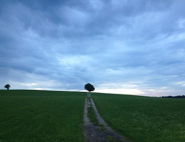 Tree Sapling Landscapes Liberty Nature Sky Freedom