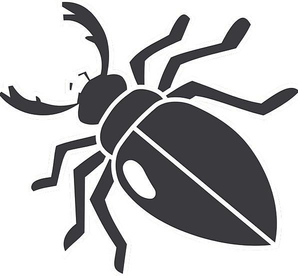 Beetle Wings Annexes Insect Legs Limbs Mandibles B