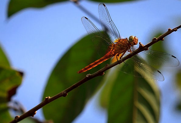 Dragonfly Landscapes Countryside Nature Insect Bug