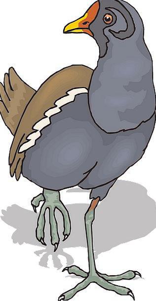 Shadow Gumshoe Fowl Wings Annexes Bird Walking Fea