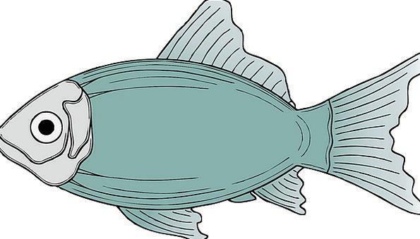 Fish Angle Sea Life Marine Life Fins Flippers Dors