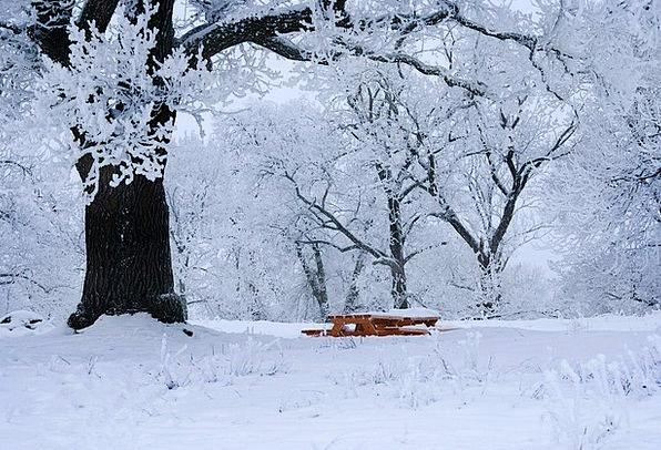 Winter Season Landscapes Emotionless Nature Snow S