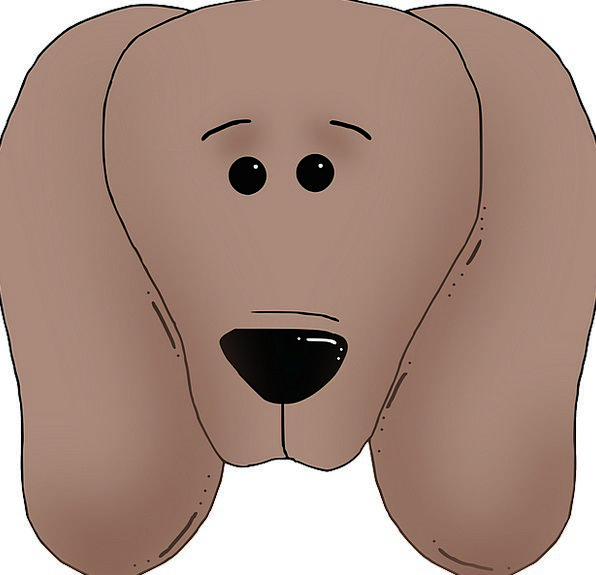 Dog Canine Brown Chocolate Face Expression Pet Dom