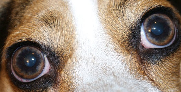 Eyes Judgments Canine Close Up Shut Dog Looking Ob