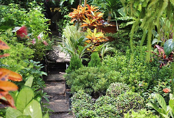 Garden Plot Lime Philippines Green Organic Manila