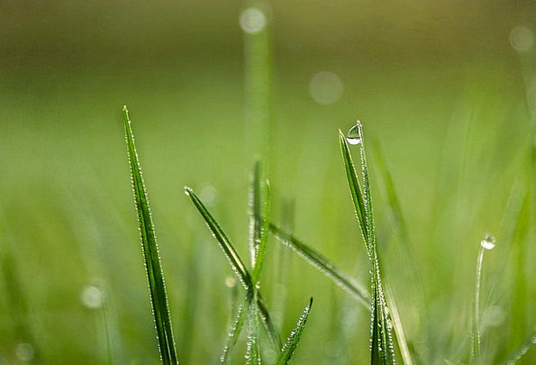 Grass Lawn Landscapes Droplets Nature Dew Precipit
