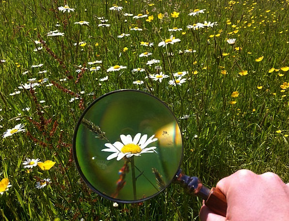 Magnifying Glass Landscapes Nature Field Arena Dai