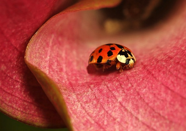 Bug Germ Flower Floret Insect Dots Calla Macro Lad