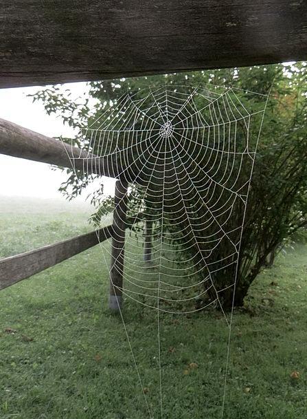 Spider Network Net Cobweb Morgentau Fog Ripe Mist