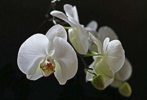 Orchid Landscapes Snowy Nature Flower Floret White