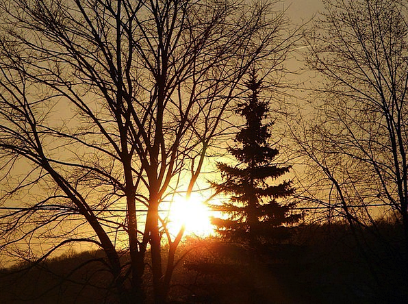 Sunrise Dawn Landscapes Outline Nature Trees Silho