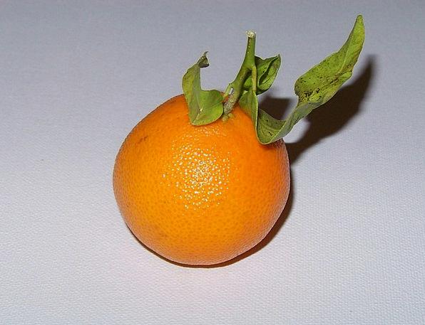 Mandarin Bureaucrat Drink Ovary Food Vitamins Frui