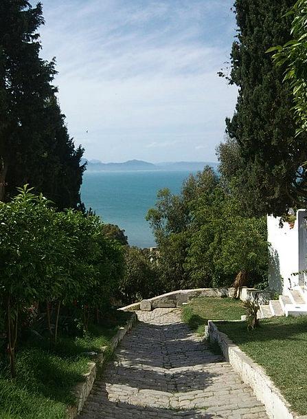 Tunisia Marine Away Absent Sea Trees Plants
