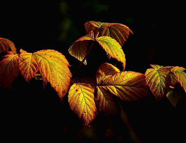 Autumn Fall Landscapes Nature Leaves Greeneries Fa
